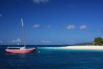 Parrot Island