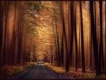 Dark forest1